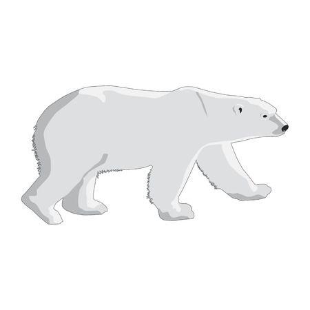 Polar Bears Cartoon Free Download Clip Art.