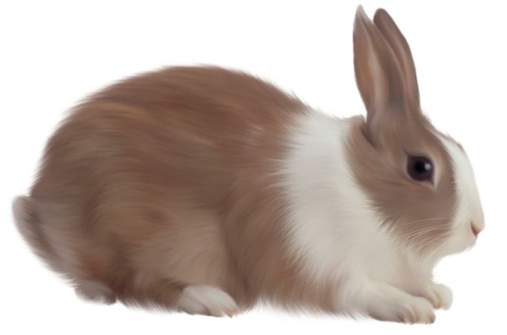 Moving bunny clip art animated rabbit pictures and 2.
