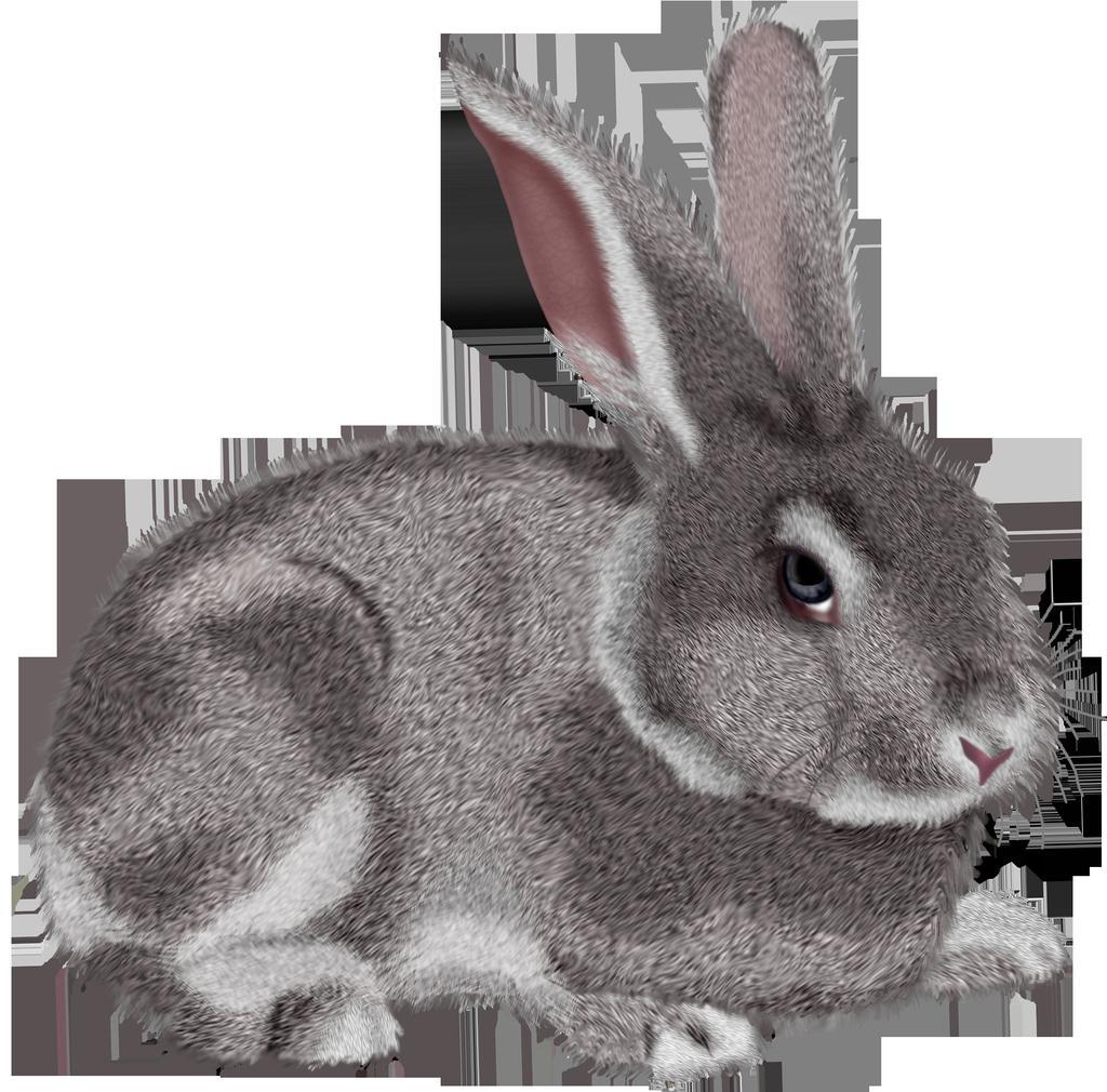 Animated Rabbit Clipart Clipart.
