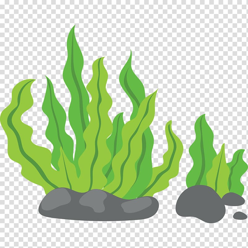 Green see weed illustrations, Seaweed , Green background.