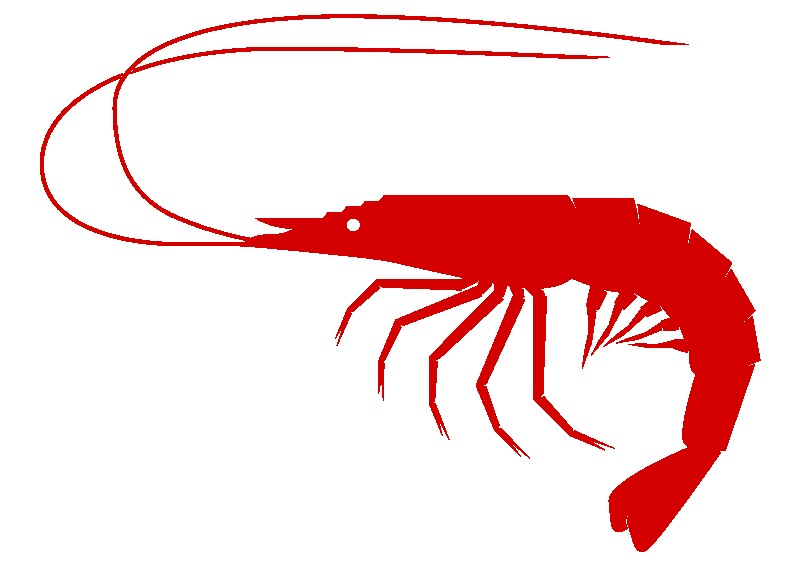 Animated Shrimp Clipart 1 For.