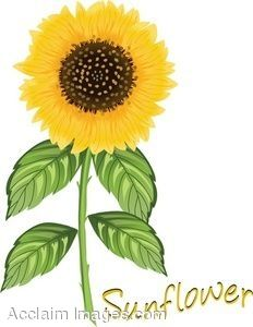 animated pictures of sunflowers.