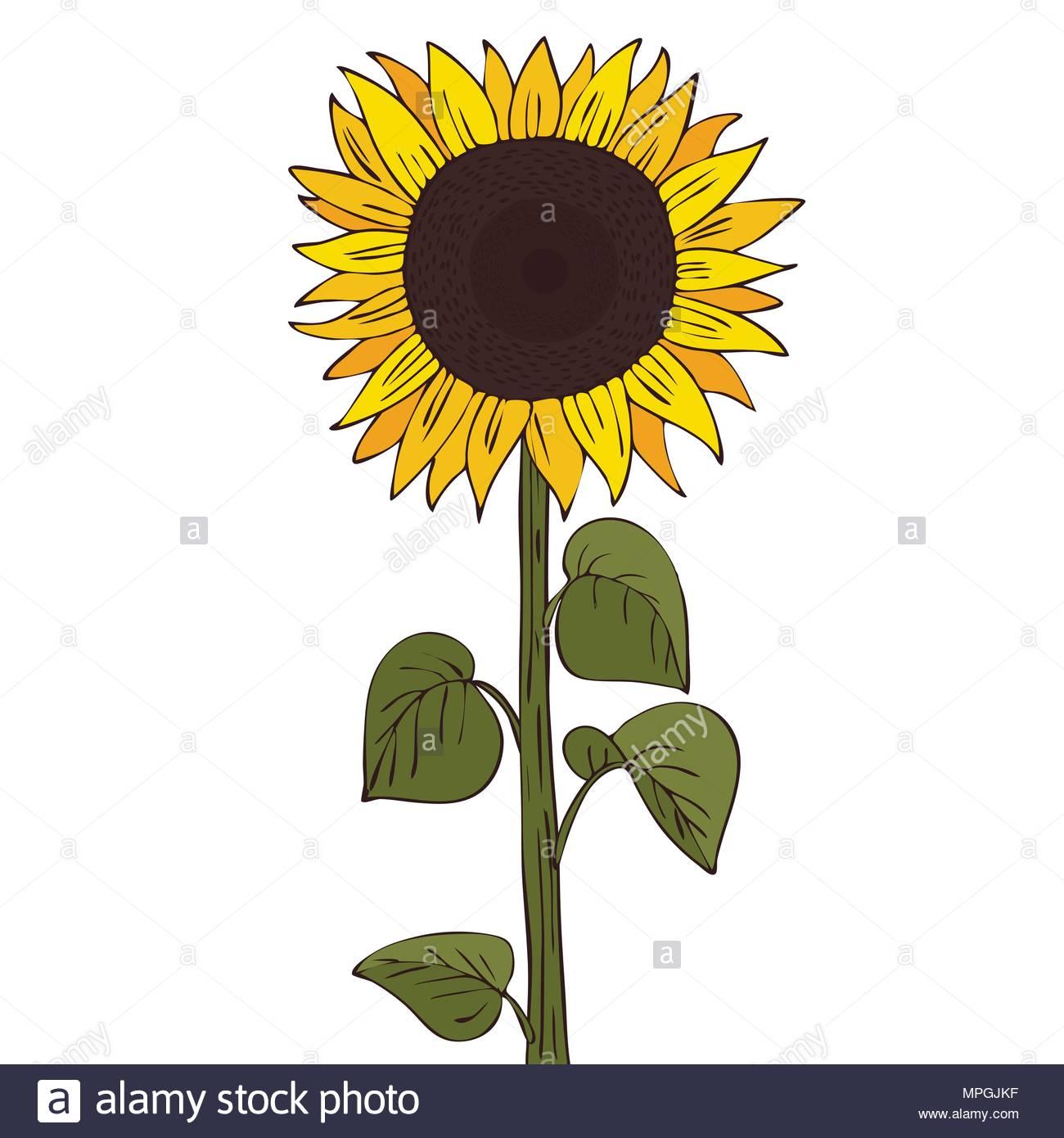 Cartoon Sunflower Stock Photos & Cartoon Sunflower Stock Images.