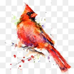 Northern Cardinal PNG.