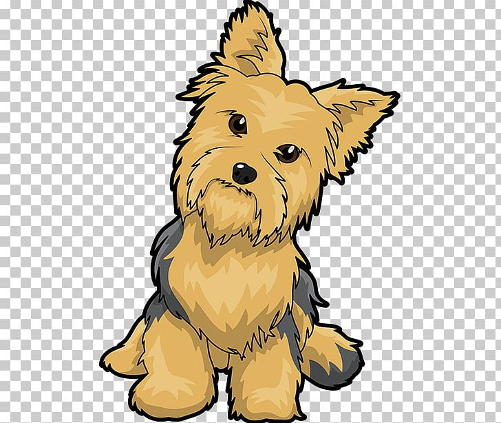 Yorkshire Terrier Puppy Maltese Dog English Toy Terrier PNG.