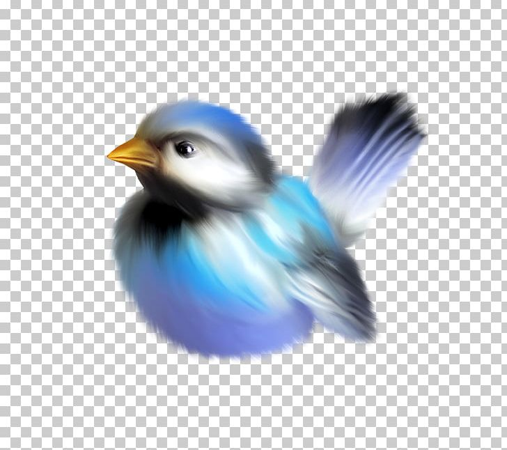Bird Drawing Anime PNG, Clipart, Animal, Animals, Anime.