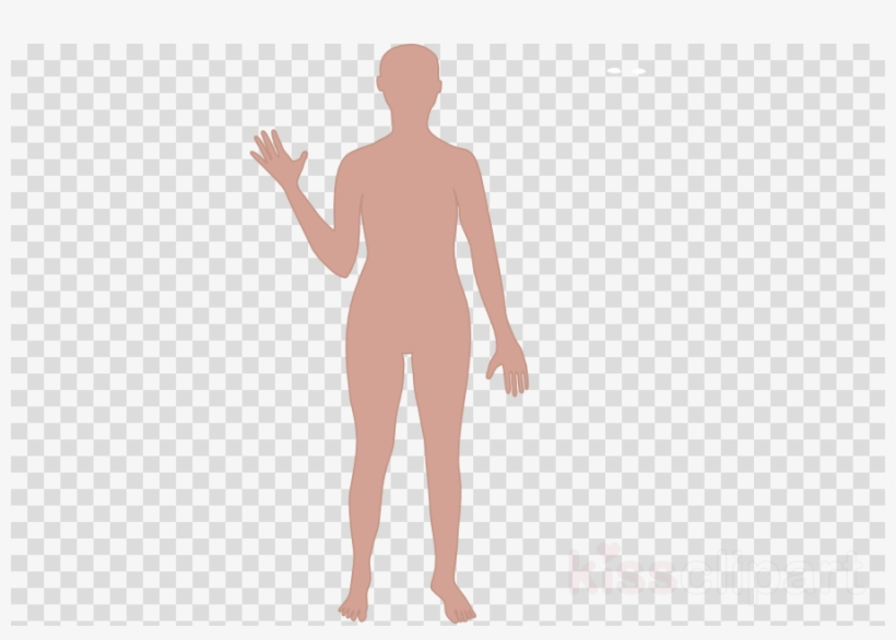 Cartoon Human Body Outline Clipart Human Body Drawing.