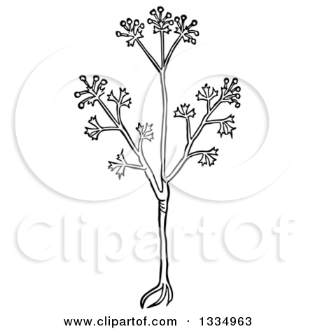 Clipart of a Black and White Woodcut Herbal Anise Plant.