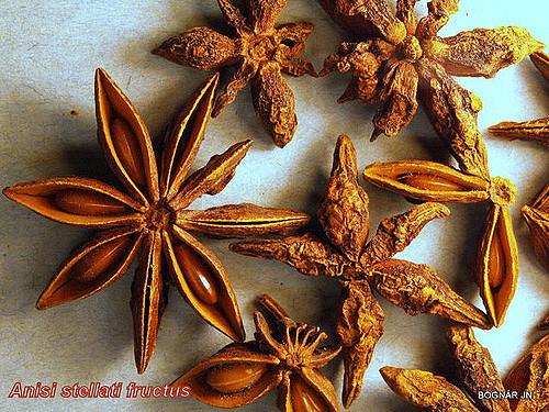 Anisi stellati fructus.