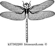 Anisoptera Clip Art Illustrations. 19 anisoptera clipart EPS.