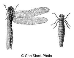 Anisoptera Illustrations and Stock Art. 35 Anisoptera illustration.
