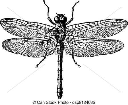 Clipart Vector of Fig 1. Dragonflies, vintage engraving..