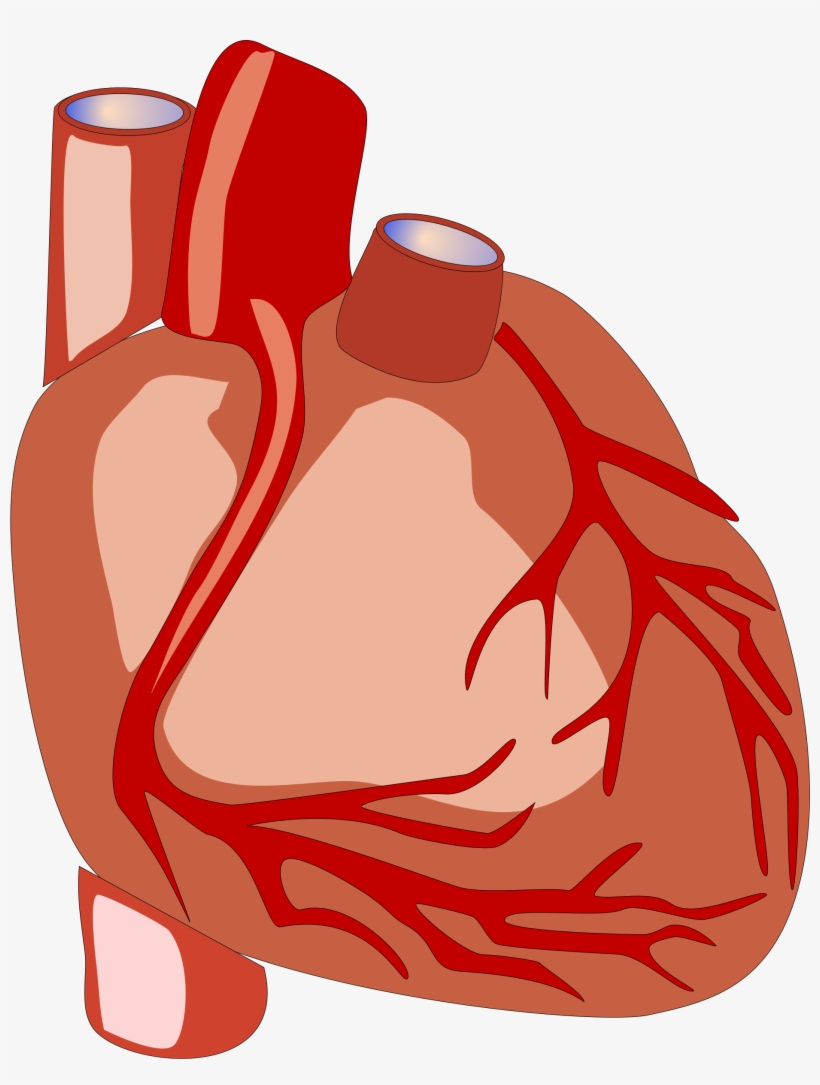 Science Clipart Heart.