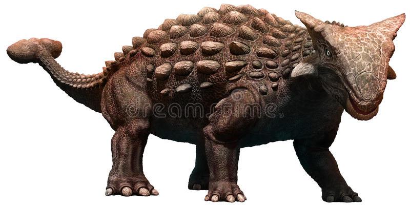 Ankylosaurus Stock Illustrations.