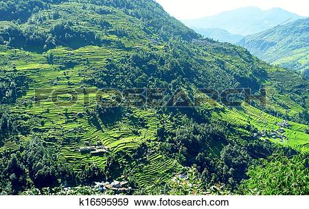 Stock Photograph of Beautiful himalayan forest landscape, trek to.