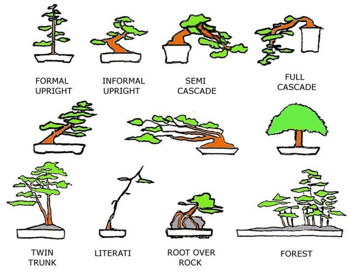 1000+ images about bonsai on Pinterest.