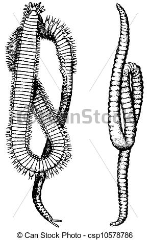 Annelid Illustrations and Clip Art. 30 Annelid royalty free.