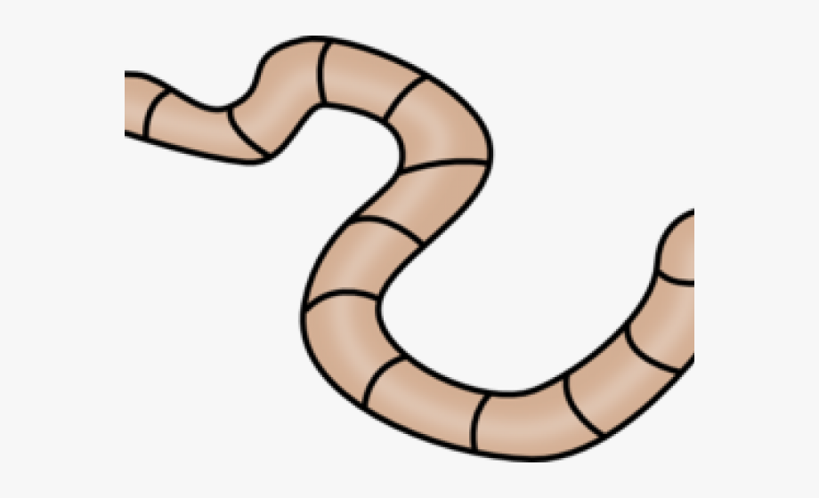 We Present To You A Worm Clipart Annelida.