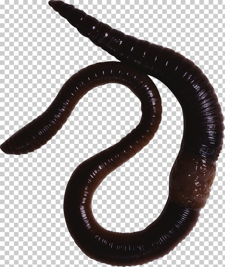 Earthworm Vermicompost Annelid Eudrilus eugeniae, fungi PNG.