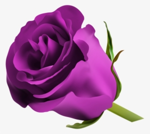 Purple Roses PNG, Transparent Purple Roses PNG Image Free.