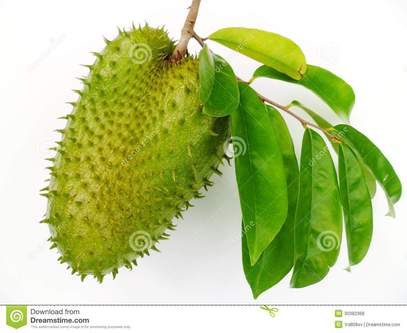 Soursop (Annona Muricata) Royalty Free Stock Photos.