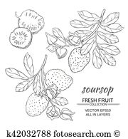 Annona muricata Clip Art and Illustration. 15 annona muricata.