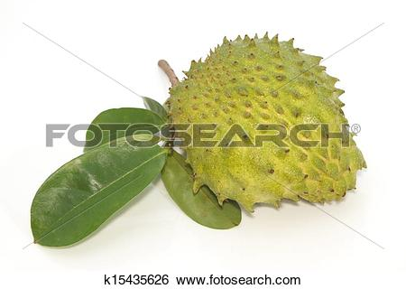 Stock Images of Soursop, Prickly Custard Apple fruit. (Annona.