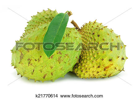 Stock Photo of Soursop, Prickly Custard Apple. (Annona muricata L.
