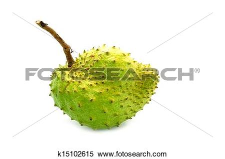Stock Image of Soursop, Prickly Custard Apple. (Annona muricata L.