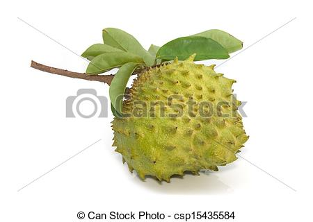 Pictures of Soursop, Prickly Custard Apple fruit. (Annona muricata.