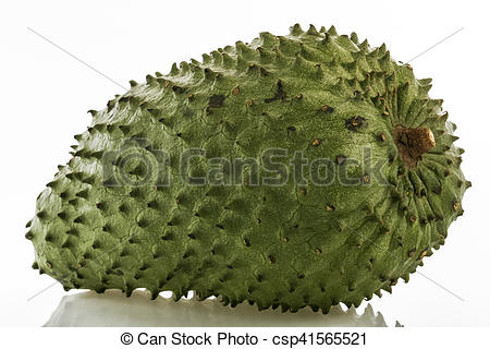 Stock Photo of Soursop (Annona muricata).