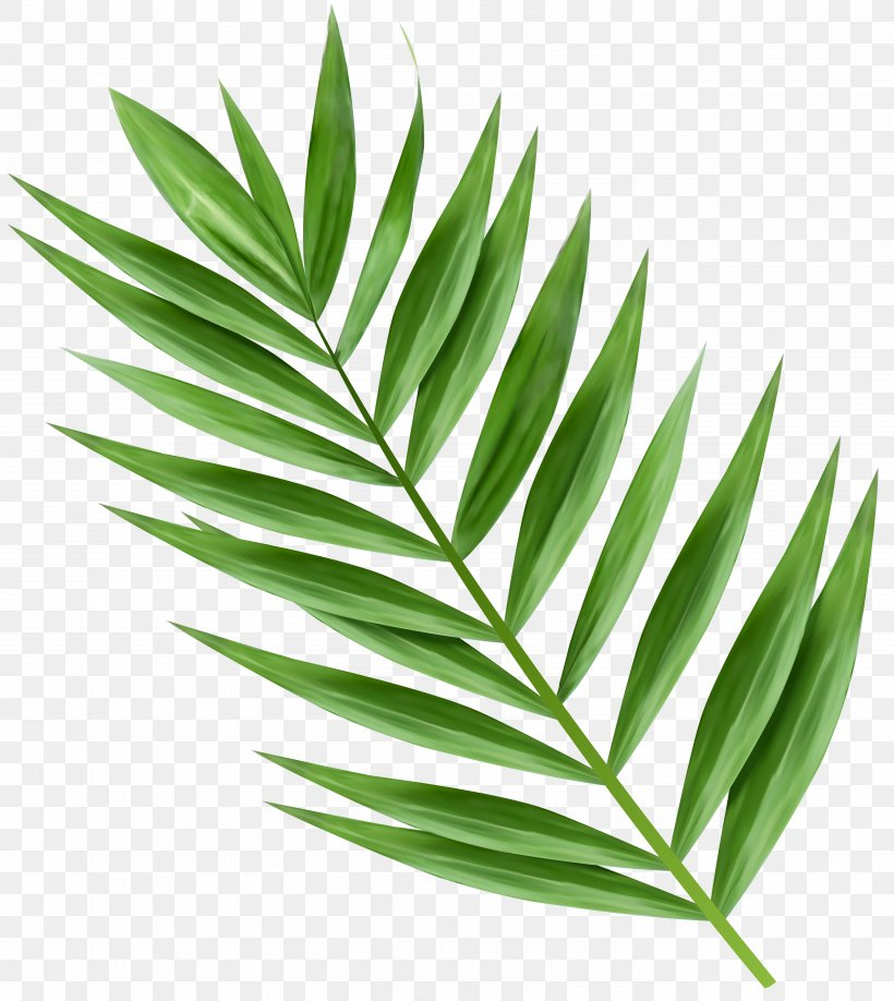 Palm Trees Trees And Leaves Palm Branch Clip Art, PNG.