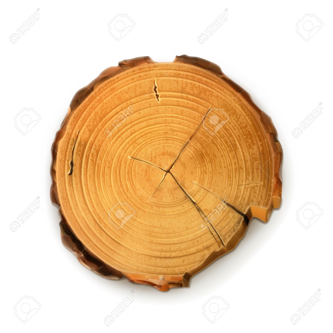 Tree Stump, Round Cut With Annual Rings Vector Royalty Free.