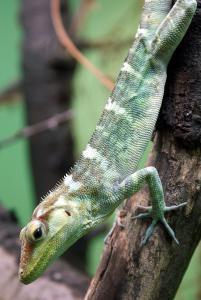 Lizard 2 Clip Art Download.
