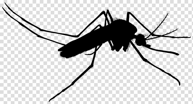 Ant, Mosquito, Insect, Insect Bites And Stings, Fly, Disease.