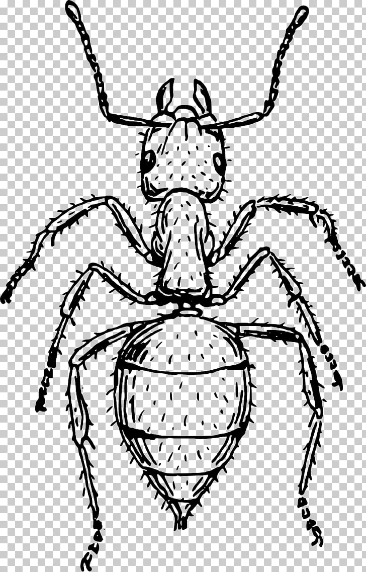 Ant Drawing Art , Dynamic Small Ant Ants PNG clipart.