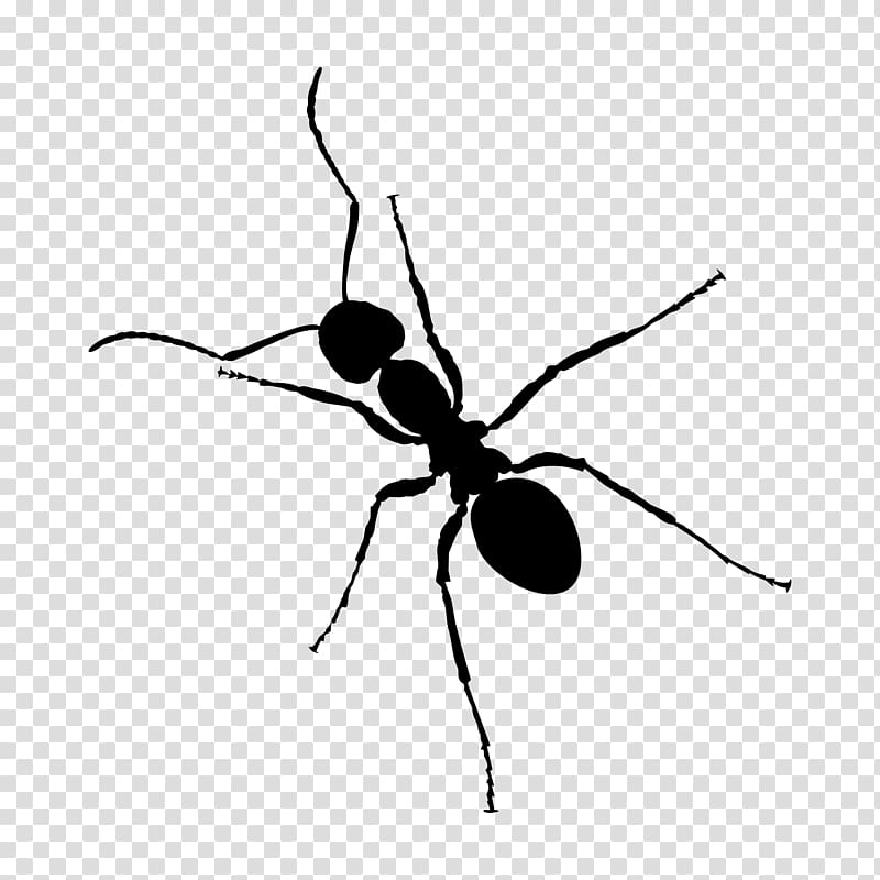 Ant Zap Black and white Insect, ant transparent background.