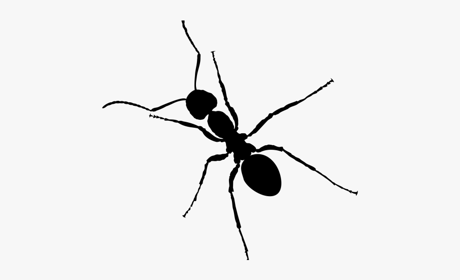 Cave Clipart Ant.