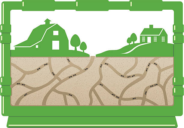 Ant Farm Clipart.