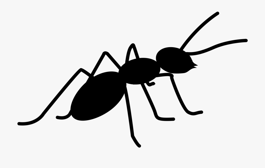 Ants Png Images Free Download Ⓒ.