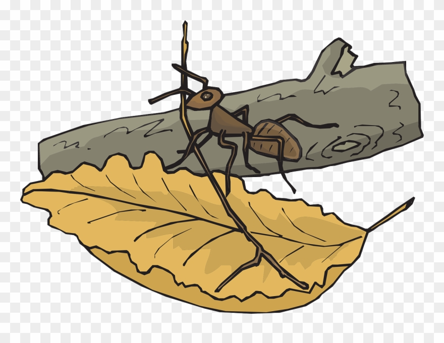 Leaf Branch Ant Log Insect Png Image.