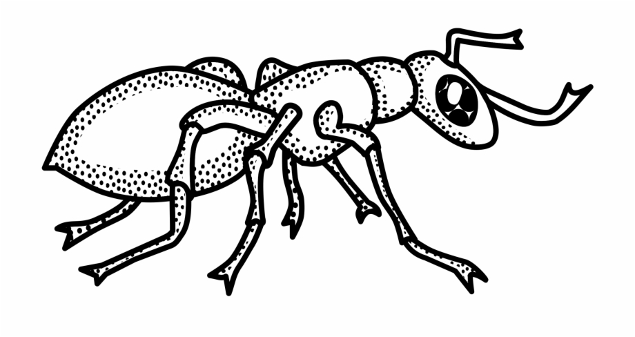 Ant Black And White Ant Clipart Outline Collection.