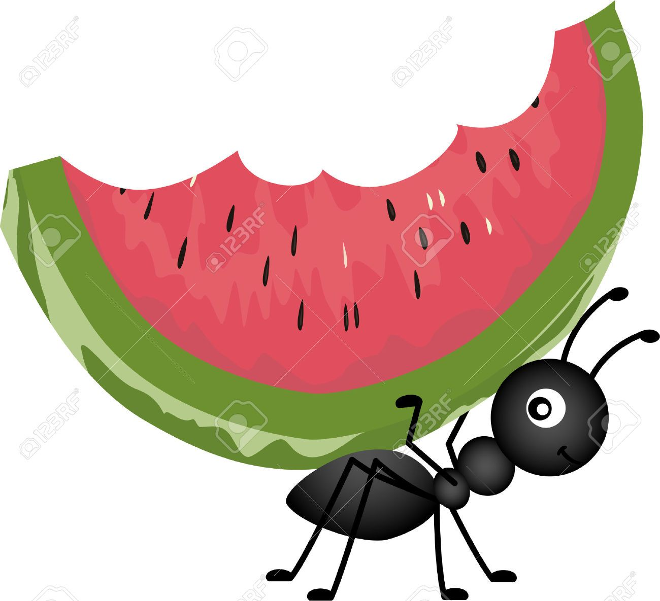 picnic food : Ant Carrying Watermelon Illustration.