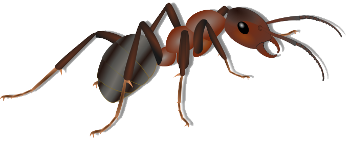 Download Ant Png Clipart HQ PNG Image.