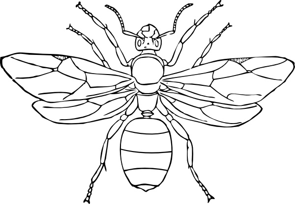 Queen Ant clip art Free vector in Open office drawing svg ( .svg.
