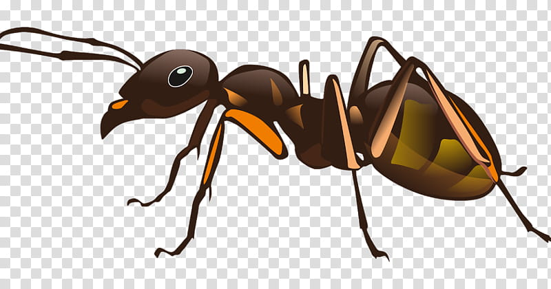 Ant, Insect, Pest, One Hour Pest Control, Carpenter Ant.