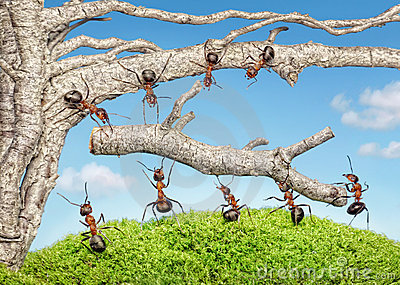 Team Of Ants Work With Branch, Teamwork Stock Images.