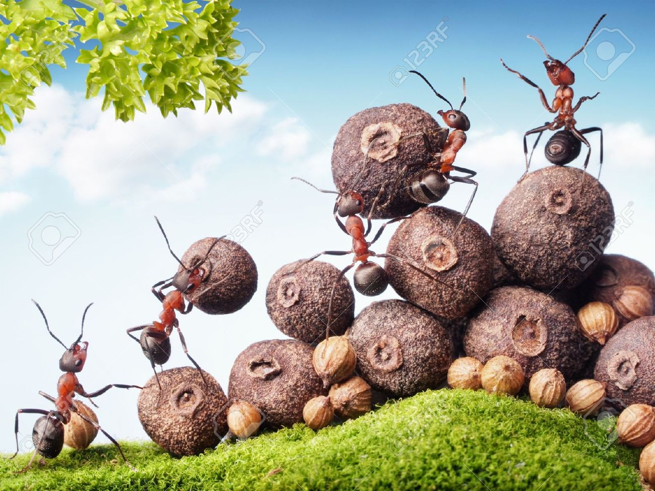 Ants Teamwork Images & Stock Pictures. Royalty Free Ants Teamwork.