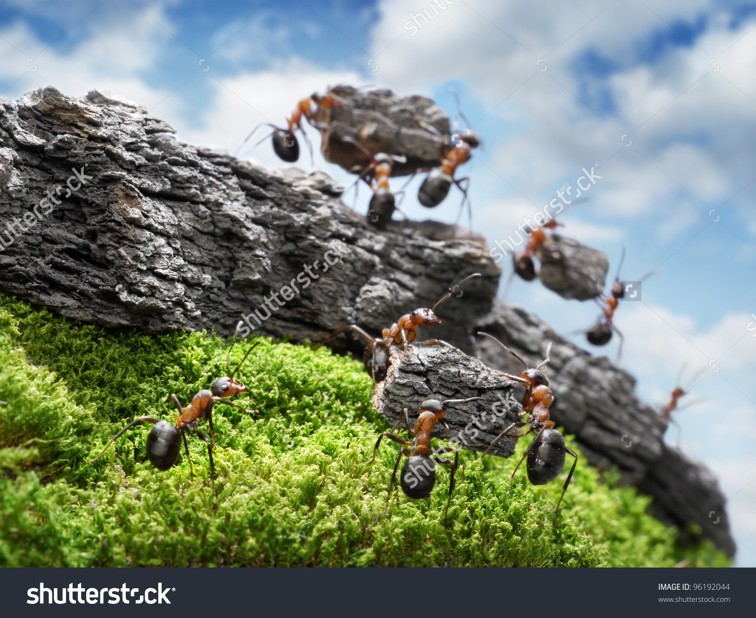 Team Ants Constructing Great Wall Teamwork Stock Photo 96192044.