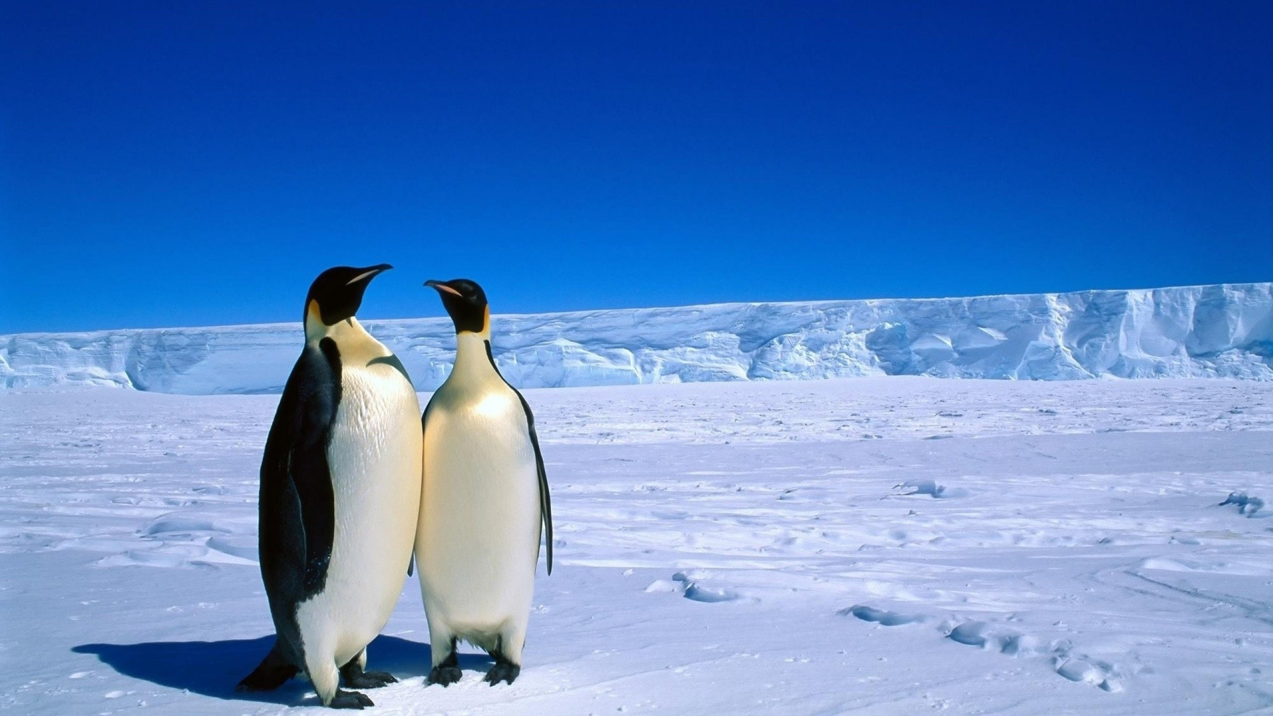 Gif clipart images of antarctica.